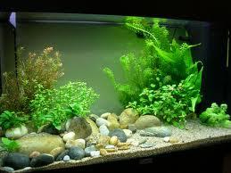 décoration aquarium galet