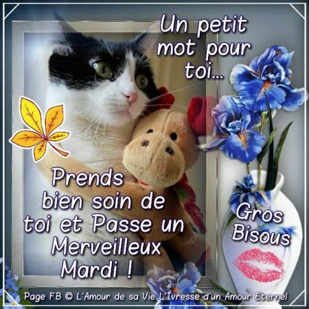 Bonjour A Tous Et Toutes Bon Mardi Blague Du Jour Humour