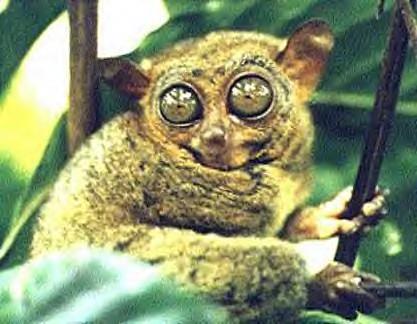 Animaux hors commun par lardjem louiza wissem blog lardjem tissemsilt - Animal qui mange les fourmis ...