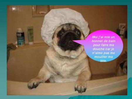 chien dans la douche par crevette44 blog reze. Black Bedroom Furniture Sets. Home Design Ideas
