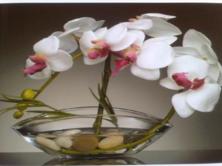 orchidee vip
