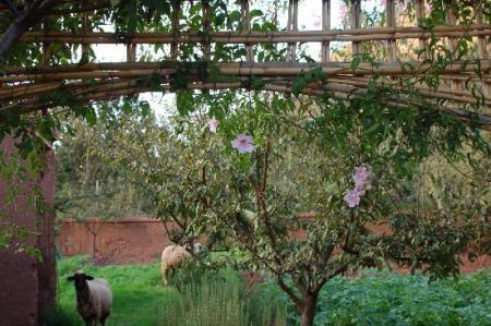 5277 visite du jardin de timalizene vallee de l 39 ourika for Au jardin des gourmets