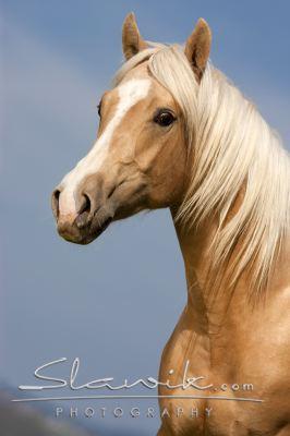 palomino unicorn by suncloud14 - photo #10