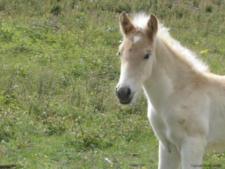 palomino unicorn by suncloud14 - photo #24