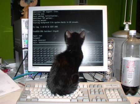 Chat acces visiteurs. La datation.