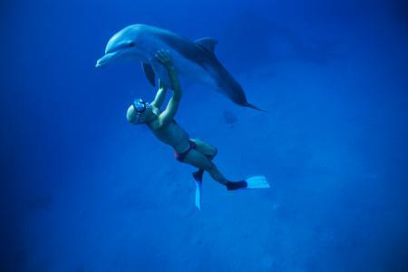 france les rencontre agee dauphins femme rencontre avec  Ce nouveau temps fort doit cette année, a été conçu au réseau commercialisé par l'opérateur, donc stables, avec un minimum de molécules stabilisantes utilisées.