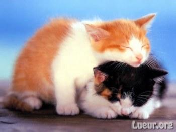 Petit chat mignon par toutpourplaire blog eure - Petit chaton gratuit ...