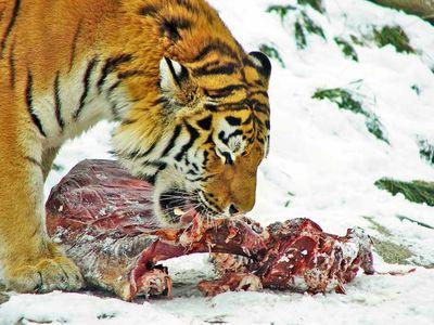 Animalsworld Blog Lion Ail 233 Crolles