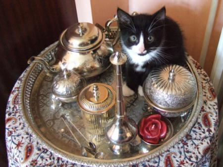 Chat marocain Rolbenzaken-vip-blog-com-252927chachouilles-amateur-the-marocain-img